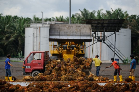 MALAYSIA-INDONESIA-COMMODITIES-PALMOIL-ENVIRONMENT